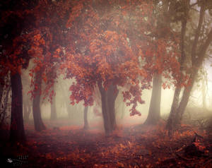 Make it happen by ildiko-neer