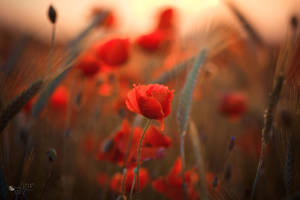 Soft Lights by ildiko-neer