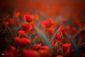 Fire Time by ildiko-neer