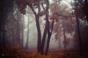 Tormented Beauty by ildiko-neer
