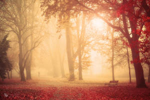 Please Stay by ildiko-neer
