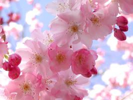 spring by Sphynx83