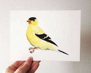 goldfinch watercolor by excentric