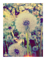 Dandelions 2 by agnesvanharper