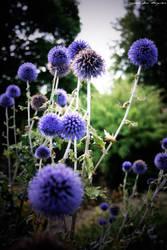 Botanic Garden 3 by agnesvanharper