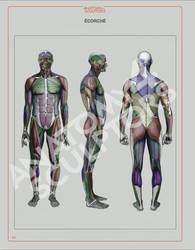 Ecorche by Anatomy 4 Sculptors by anatomy4sculptors
