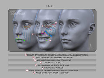 Anatomy of Smile by anatomy4sculptors