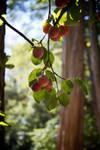 Wild Prunes by GeoffroyVincens