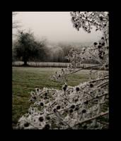 Biran - Christmas 2006 - 02 by GeoffroyVincens