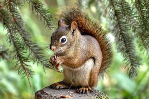 Alaska Squirrel by MisterKrababbel