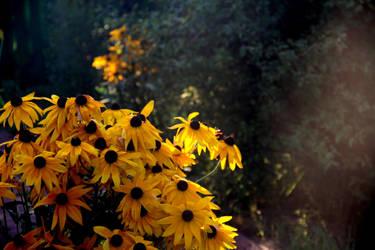 Full of sun by Irula-n