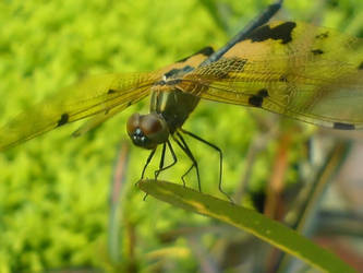 Dragonfly by innovation4d