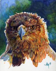happy hawk by Novawuff
