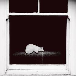 Peeping Tom by Vignnette