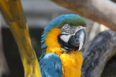 043 - Macaw by M-Knowler