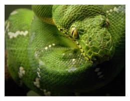 Emerald Coils by HeWhoWalksWithTigers