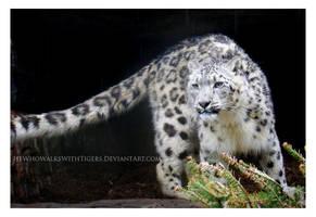 Rain Leopard by HeWhoWalksWithTigers