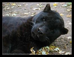 Grumpy Cat by HeWhoWalksWithTigers