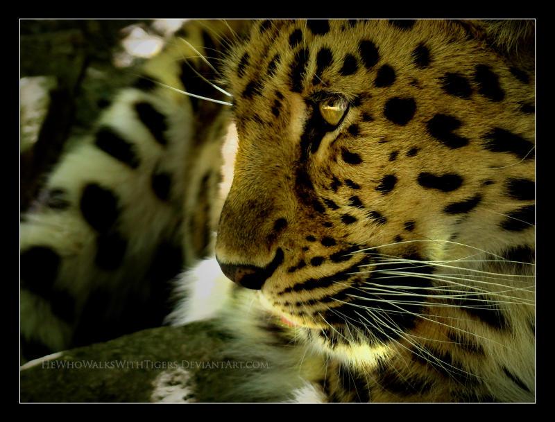 Golden Eye by HeWhoWalksWithTigers