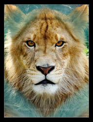 King of Diamonds by HeWhoWalksWithTigers