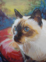 Ming the Siamese by Wildatart24