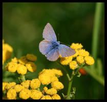 Butterfly again by fuchi