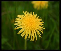 Flower by fuchi