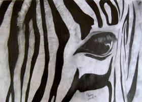 Zebra by Renny222