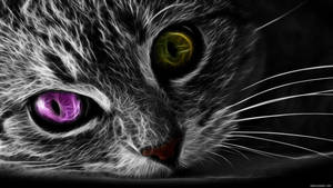Cats Eyes by Michalius89