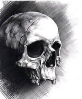 skull by VladimirNov