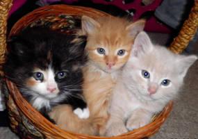 Three in a Basket by ChicaDelMar