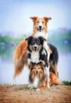 Dog pyramid by Ksuksa-Raykova