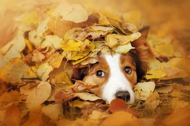 Ray in autumn by Ksuksa-Raykova