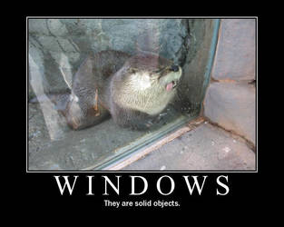 WINDOWS by funnypictureslol