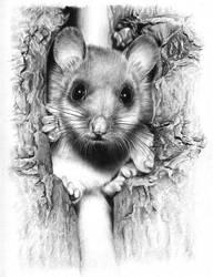 Mouse by AlexanderLevett