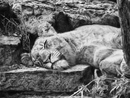The Lioness (drawing by Alexander Levett) by AlexanderLevett