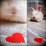 .bunny. by candymax