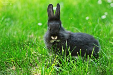 My bunny by LiGiK
