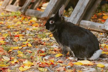 My bunny grew up by LiGiK