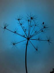 BlackBlue by melihsaricam