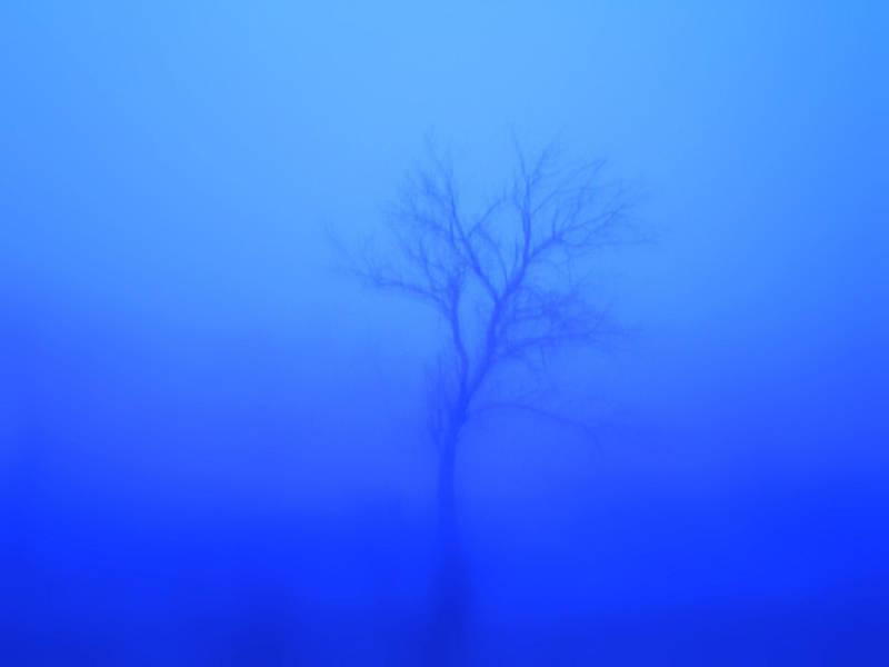 The Lost Tree by melihsaricam