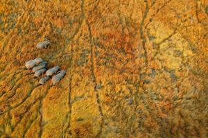 Elephant tracks by mpoliza