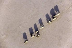 Elephants in Desert by mpoliza