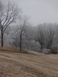 Frosty Morning by operabutterfly