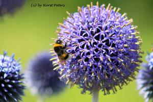 Bumblebee by bluesgrass