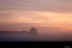 Foggy evening by bluesgrass