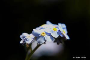 Blue blue night... by bluesgrass