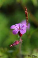 Little Beauty by bluesgrass