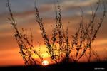 Sunset 56 by bluesgrass