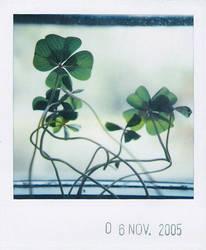 growing by prismopola
